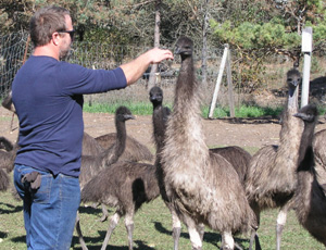 Green Plate Challenge' Brings Business to Local Emu Farm