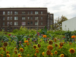 Urban Agriculture: A True Story from WWII