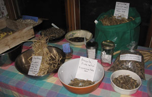 Our Voices: Get Farming! Workshops Off and Running