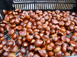 Our Voices: Chestnut Time!